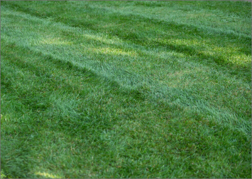 picture of grass